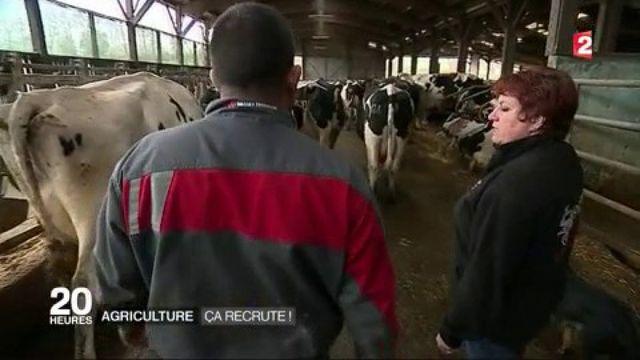 Emploi : le secteur agricole recrute