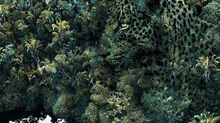 """""""Amazonie. Le chamane et la pensée de la forêt"""" exposition au château des Ducs de Bretagne à Nantes (Felipe Diaz)"""