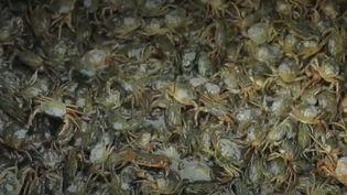 France Télévisions est parti à la rencontre d'un pêcheur pendant sa chasse aux crabes verts, à Venise, en Italie. (CAPTURE ECRAN FRANCE 2)