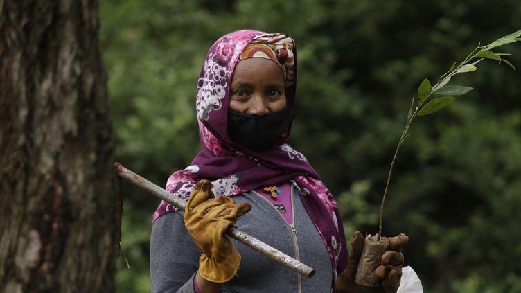 Cette Ethiopienne prend part à la campagne de reforestation lancée depuis 2019 par le gouvernement éthiopien. Malgré le coronavirus, le Premier ministre a fixé à 5 milliards l'objectif de plantation en 2020 (Addis Abeba, le 5 juin 2020). (Minasse Wondimu Hailu / ANADOLU AGENCY)