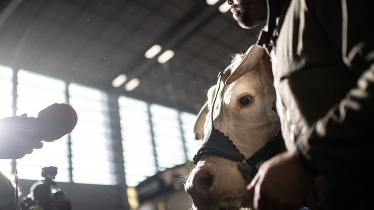 Un journaliste s'adresse à un éleveur lors du 57e Salon de l'agriculture, à Paris, le 21 février 2020. (MARTIN BUREAU / AFP)