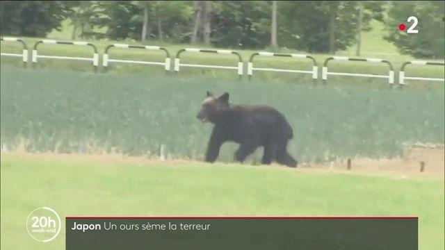Japon : un ours sème la terreur en ville et fait quatre blessés