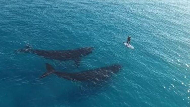 Capture d'écran montrant un homme en paddle à côtéde deux baleines au large d'Esperance, sur la côte sud de l'Australie-Occidentale. Septembre 2015 (JAIMEN HUDSON / YOUTUBE )