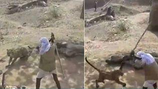Capture d'écran montrant l'homme avec un bâton s'attaquant à un léopard, dans un village indien (NEWSCHANNEL / YOUTUBE )