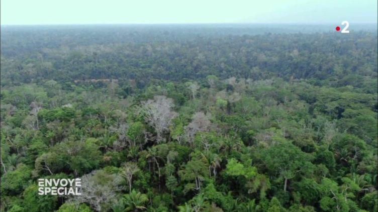 Comment la déforestation de l'Amazonie peut affecter le climat en France (ENVOYÉ SPÉCIAL  / FRANCE 2)