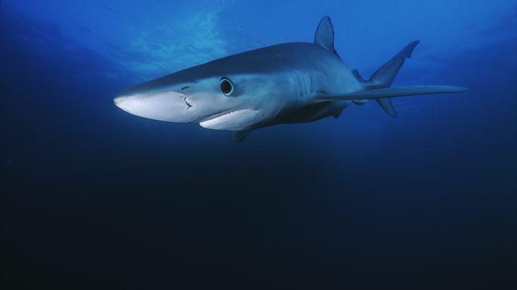 Une plage dela Teste-de-Buch, dans le bassin d'Arcachon (Gironde), a été fermée le 21 août 2019 à cause de la présence d'un requin bleu. (MAXPPP)
