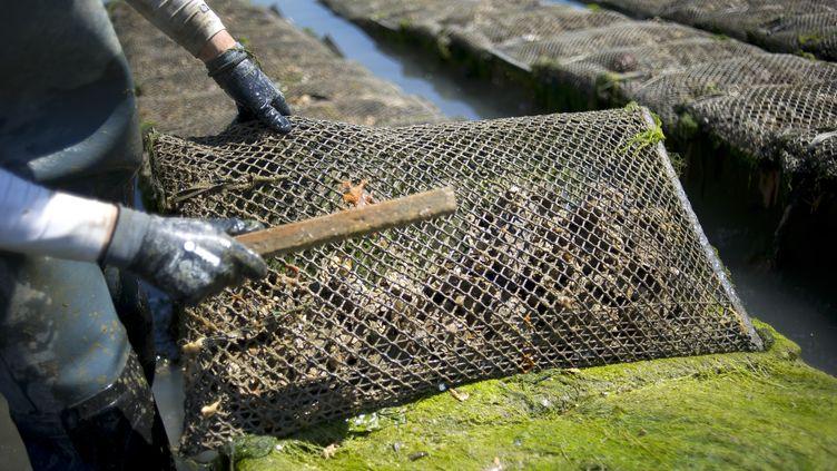 Parcà huîtres à Etel en 2014 (JEAN-SEBASTIEN EVRARD / AFP)