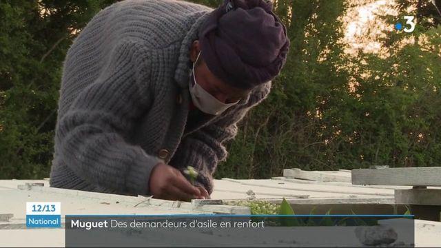 Muguet : les demandeurs d'asile en renfort pour la récolte