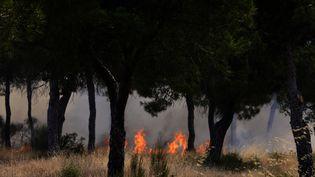 L'incendie dans le parc naturel de Doñana (Espagne) le 25 juin 2017. (CRISTINA QUICLER / AFP)