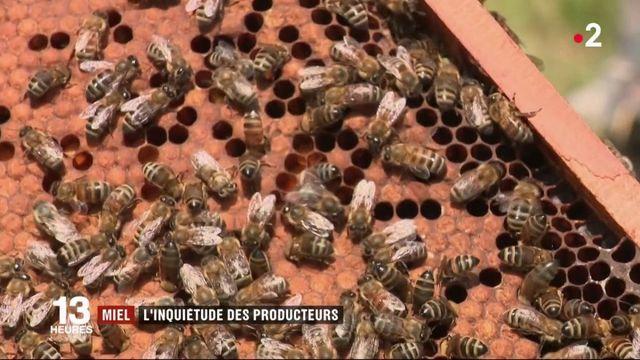 Agriculture : la météo capricieuse fait craindre le pire aux producteurs de miel