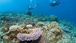 Inscrite au patrimoine mondial de l'Unesco en 1981, la Grande Barrière s'étend sur environ 345 000 km2 le long de la côte australienne. (JEAN-MICHEL MILLE / ONLY WORLD / AFP)