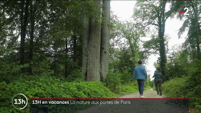La forêt domaniale d'Ermenonville, dans l'Oise, a attiré de nombreux écrivains qui venaient de Paris pour s'y ressourcer. Le 13 Heures de France 2 vous fait découvrir ses trésors historiques.
