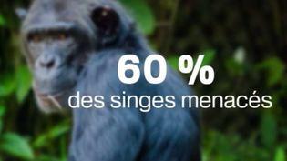 singes (FRANCE 3)