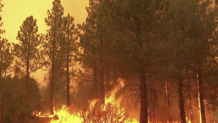 En Californie (États-Unis), les pompiers tentent de lutter pour sauver des flammes des séquoias gigantesques. (CAPTURE ECRAN FRANCE 2)