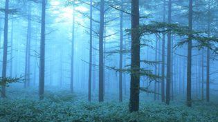 Une forêt de mélèzes. (JTB PHOTO / MAXPPP)