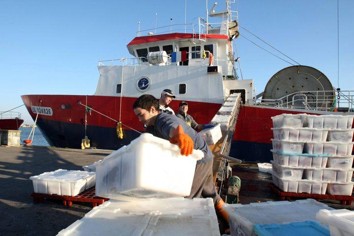 """Des marins débarquent du poisson des cales du """"Mariette Le Roch II"""", un chalutier de la Scapêche, à Lorient (Morbihan), le 20 août 2012. ( MAXPPP)"""