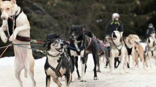 Des chiens de traîneaux en Savoie. (CAPTURE ECRAN FRANCE 2)