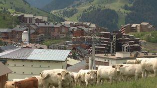 Depuis 30 ans, Toni Del Monte accompagne chaque été des vaches dans la célèbre station de ski de l'Alpe-d'Huez (Isère). Mais le bouvier va bientôt prendre sa retraite et les éleveurs de la région ne lui ont pas encore trouvé de successeur. (FRANCE 3)