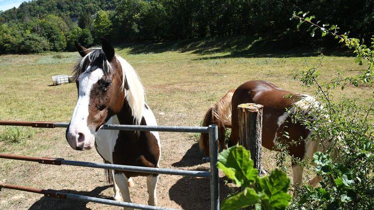 Un élevage de chevaux à Leschères (Jura) victime d'attaque sur les équidés. (PHILIPPE TRIAS / MAXPPP)
