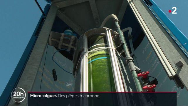 Environnement : les micro-algues, nouvelles armes contre la pollution ?