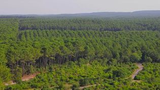 Pourquoi ne pas parcourir les forêts de France en vélo ? Le journal du 13 Heures vous emmène dans les Landes, le long du littoral Atlantique, un parcours de 1 200 kilomètres dédié aux deux-roues. (France 2)