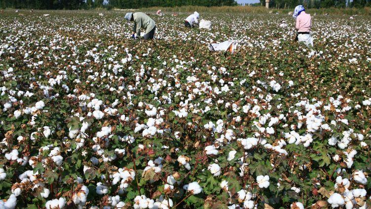 (Illustration : un champ de coton en Chine, en septembre 2010 © Maxppp)