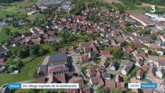 Alsace : le village de Muttersholtz, roi de la biodiversité