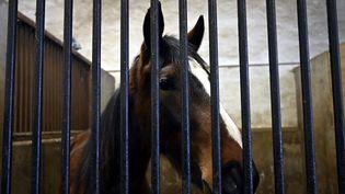 Un cheval dans son box au Haras national de Rosières-aux-Salines (Meurthe-et-Moselle), le 4 février 2021. (ALEXANDRE MARCHI / MAXPPP)