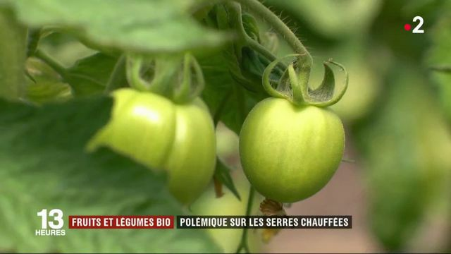 Tomates bio : des maraîchers s'opposent à la production sous serres chauffées