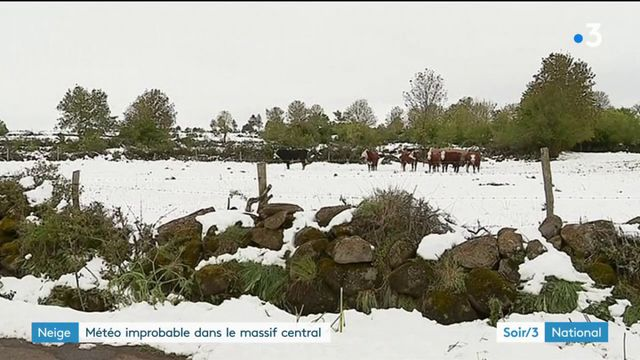 Neige improbable dans le Massif central