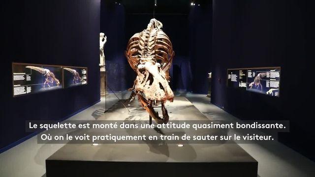 On vous présente un T. Rex à Paris