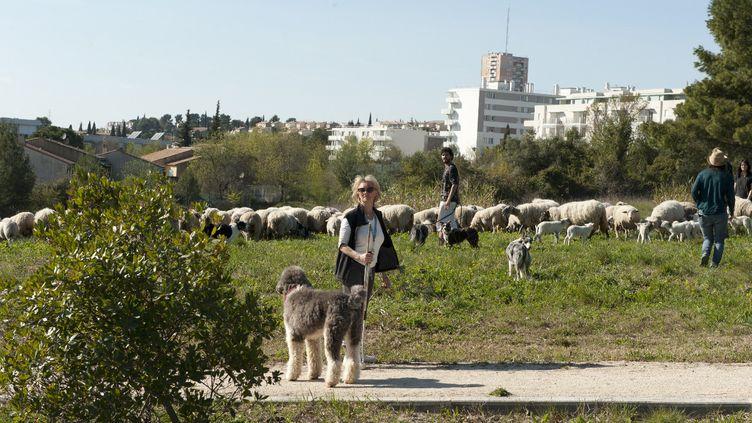 Les villes sont de plus en plus nombreuses à confier l'entretien de leurs espaces verts à des animaux et leurs bergers. (ISABELLE MORAND / ECOZOONE / RADIO FRANCE / FRANCE INFO)