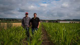 Directement impactés par la sécheresse, Régis Allaire et Jérôme Canival, céréaliers dans l'Eure, posent au milieu des maïs qui ne font que 40 centimètres de haut, alors qu'à cette époque de l'année, ils devraient atteindre 2 mètres. (JEF.FERNANDEZ / RADIO FRANCE)
