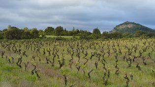 Vignoble biologique dans les Corbières (CHRISTIAN KÖNIG / BIOSPHOTO/AFP PHOTO)