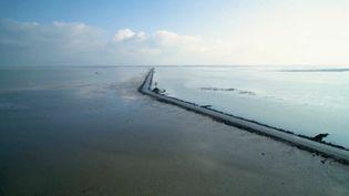 Vendée : sur le mythique passage du Gois, qui vit au rythme des marées (FRANCE 2)