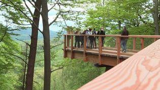 Le chemin des cimes, dans le Bas-Rhin, offre une promenade au sommet des arbres unique en France. Les visiteurs se réjouissent de le retrouver. (CAPTURE D'ÉCRAN FRANCE 3)