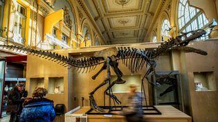 Kan, lesquelette d'un allosaure, est exposé à la société de vente aux enchères Aguttes deLyon, le 5 décembre 2016. (JEFF PACHOUD / AFP)