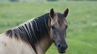 Findus France a retiré des rayons françaisdes lasagnes, de la moussaka ou encore du hachis parmentier susceptibles de contenir de la viande de cheval de Roumanie. (YVAN TRAVERT / PHOTONONSTOP / AFP)