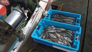 Après les légumes, pourquoi ne pas acheter son poisson en circuit court. France 3 fait le point sur les avantages et les inconvénients. (France 3)