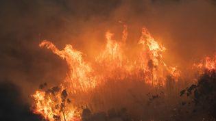 De violents incendies près de Bairnsdale, dans l'Etat de Victoria (Australie), le 31 décembre 2019. (HANDOUT / STATE GOVERNMENT OF VICTORIA / AFP)