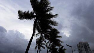 Des palmier balayés par le vent à Porto-Rico, sur la trajectoire de l'ouragan Irma, mardi 5 septembre 2017. (THAIS LLORCA / EFE)