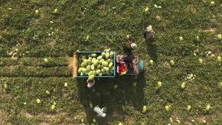 Un champ de pastèques, en Chine. (CAPTURE ECRAN FRANCE 2)