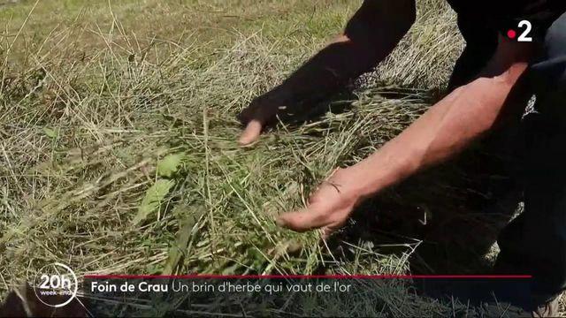 Le foin de Crau, un brin d'herbe qui vaut de l'or