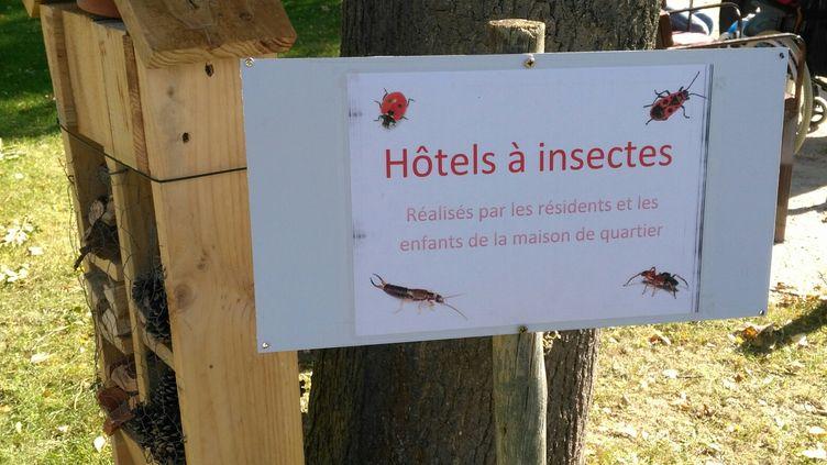 Hôtel à insectes construit par les enfants et les résidents (Frédérique Marié France Info/ Radio France)