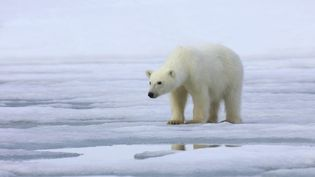Un ours polaire au Svalbard (Norvège), le 1er juillet 2010. (MAXPPP)