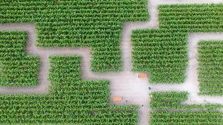 Un couple de Bretons a eu l'idée originale de créer un labyrinthe dans un champ de maïs près de Rennes (Ille-et-Vilaine). (CAPTURE ECRAN FRANCE 3)