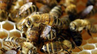 Des abeilles dans une ruche en plein travail. (MAXPPP)