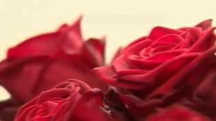 À quelques jours du rendez-vous annuel des amoureux, France 2 vous donne le mode d'emploi pour bien choisir vos roses. (France 2)