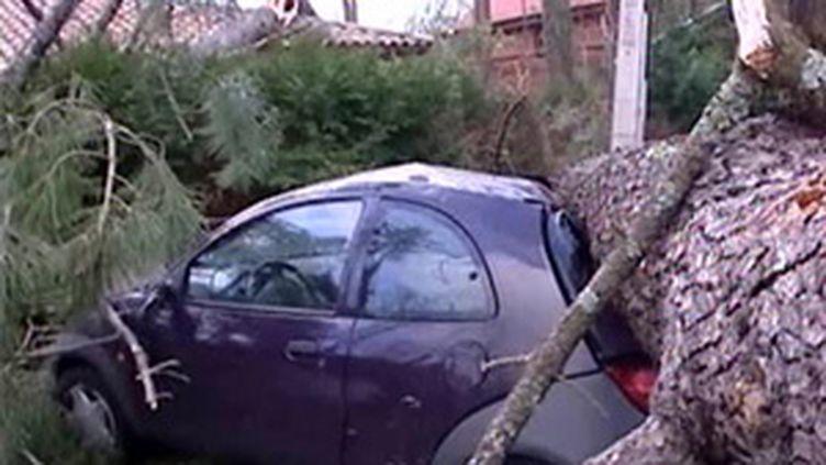 Dégats causés par la tempête (25/01/2009)