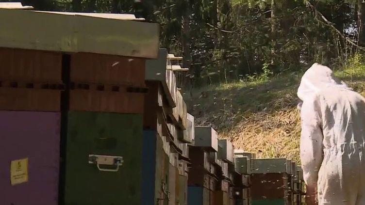 Les abeilles vont pouvoir changer d'air : les apiculteurs les déplacent en fonction des floraisons. Il s'agit du même principe que la transhumance. (France 3)